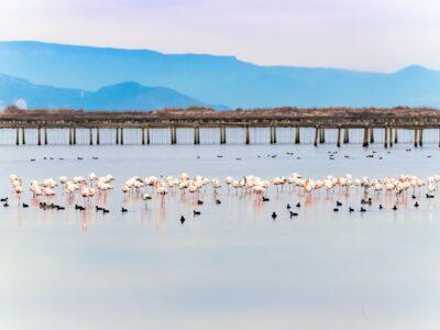 Ebro Delta Wetland