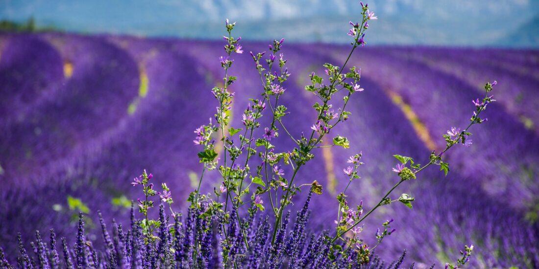 Reisgids Provence Camargue
